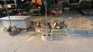 Ducks in tiny cages at the market of Kon Tum